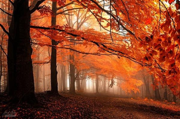 秋といえば紅葉や落葉の季節!美しすぎる秋の森の画像20枚 (2)