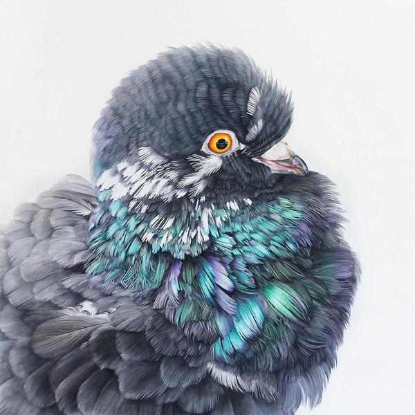 美しい鳩の油絵!卵から孵化して家族となった鳩 (4)