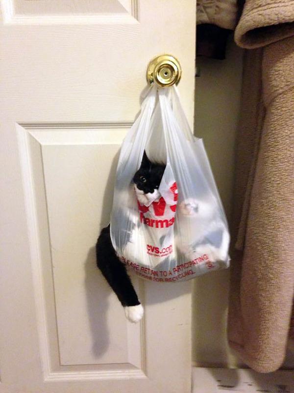 大ピンチに陥ったドジっ子なにゃんこ達!【猫画像33枚】 (27)