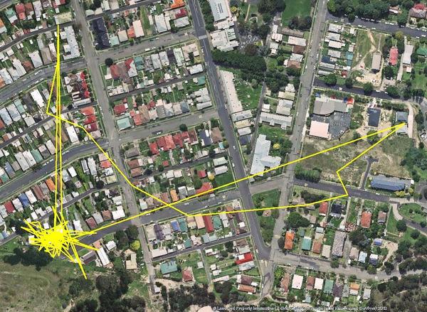 猫の行動範囲が思ったより広い!GPSで猫の行方を追跡 (6)