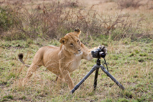 カメラに興味津々な動物の画像 (2)