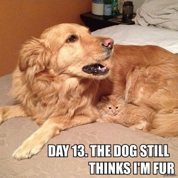 犬の毛に隠れる猫