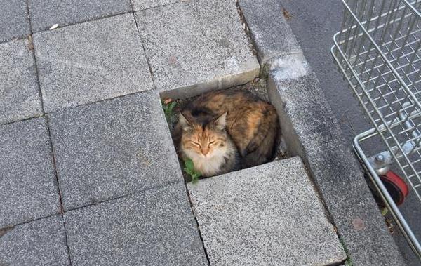 ジャストフィット猫 2