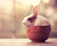 魔法の世界に住んでいるような超可愛いウサギ達の写真