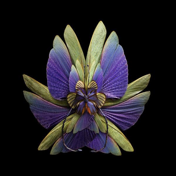 蝶々や昆虫の翅(はね)を合成して作った花の写真シリーズ (5)