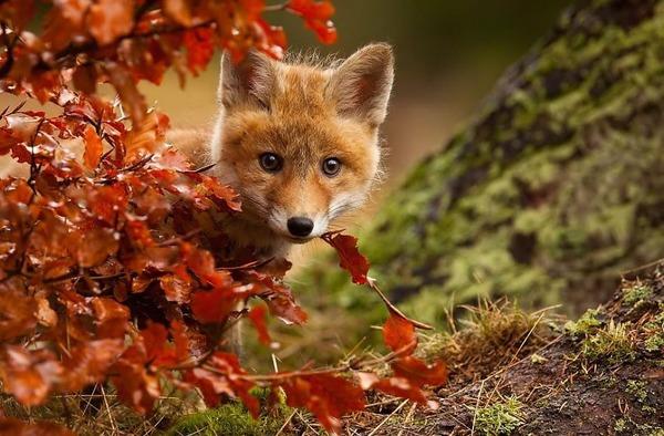 紅葉や秋の森の中を楽しむ動物たちの画像 (5)