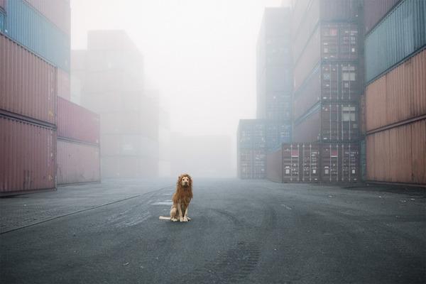 ライオン…の格好をしたわんこが街をさまよい歩く!【犬画像】 (1)