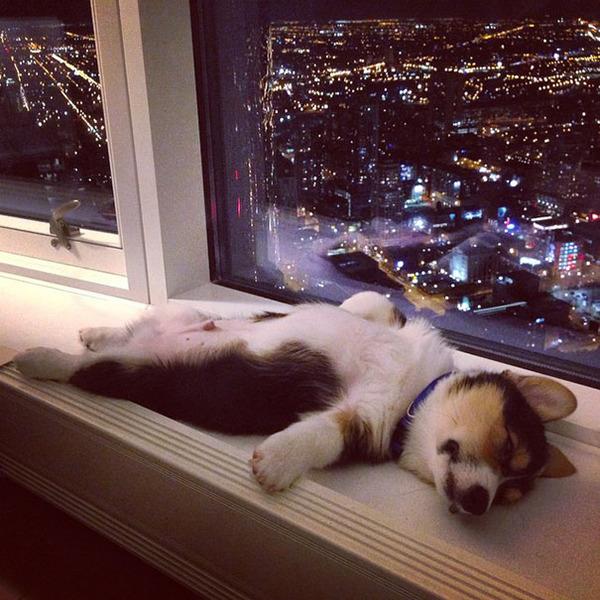 どこででも居眠りしちゃう子犬の可愛い画像 11