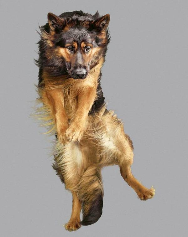 飛ぶ犬!空飛ぶわんこの絶妙な表情が逸品な写真 (15)