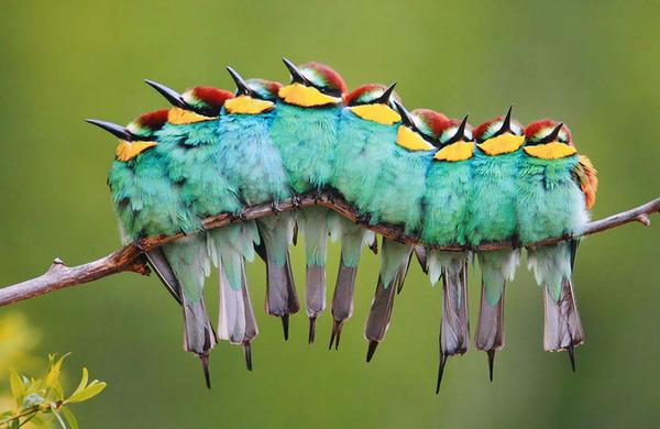 小鳥が温まる為に皆で寄り添っている可愛い画像 (1)
