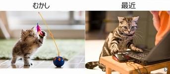 【猫画像】変化していく猫の生活を過去と現在で比較!