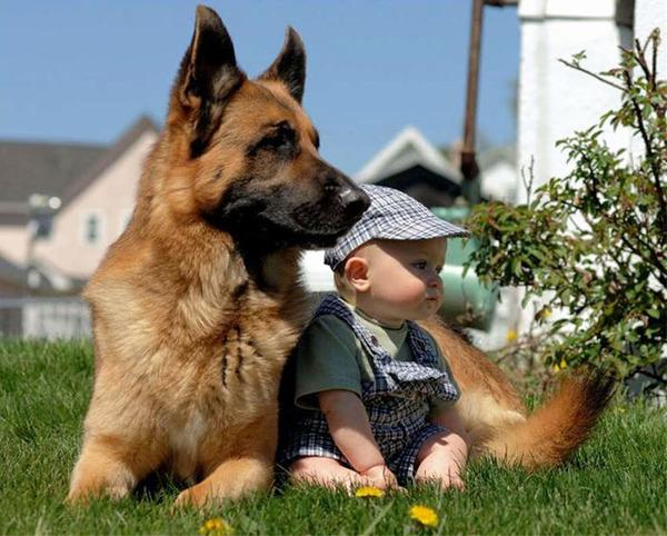 ペットは大切な家族!犬や猫と人間の子供の画像 (18)