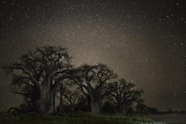 星空と古い木の美しい風景写真 13