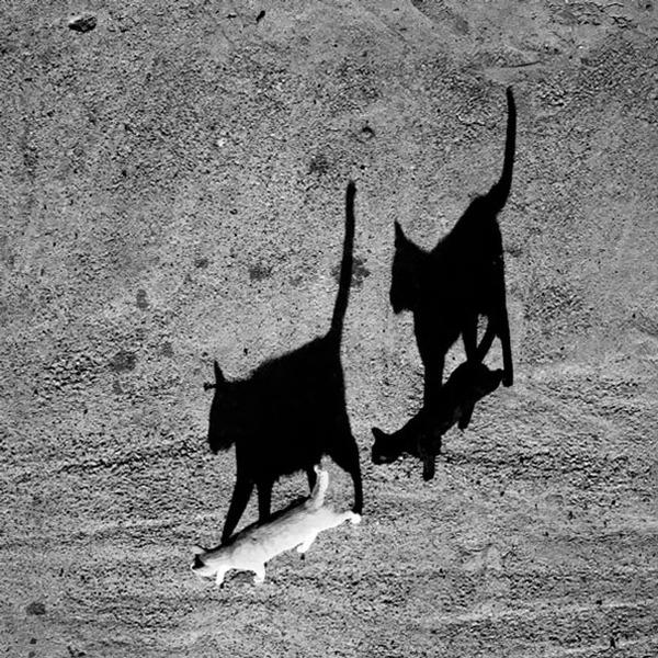 黒猫と白猫どっちが好き?どっちも可愛すぎ【猫画像】 (7)