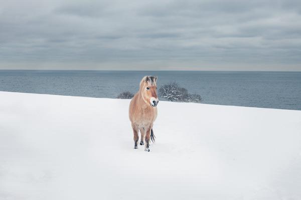 野生の馬の写真 (5)