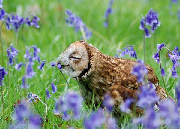 くんくん良い香り。花の匂いを嗅ぐ動物たちの画像 (37)