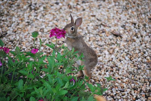 くんくん良い香り。花の匂いを嗅ぐ動物たちの画像 (19)