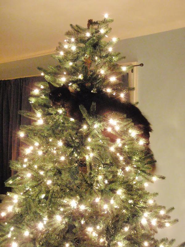 猫、あらぶる!クリスマスツリーに登る猫画像 (7)