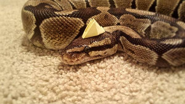 なんだこれカワイイぞ!帽子を被ったヘビ画像特集 (1)