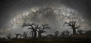 綺麗ファンタジー!満天の星空と古い木々の自然風景写真