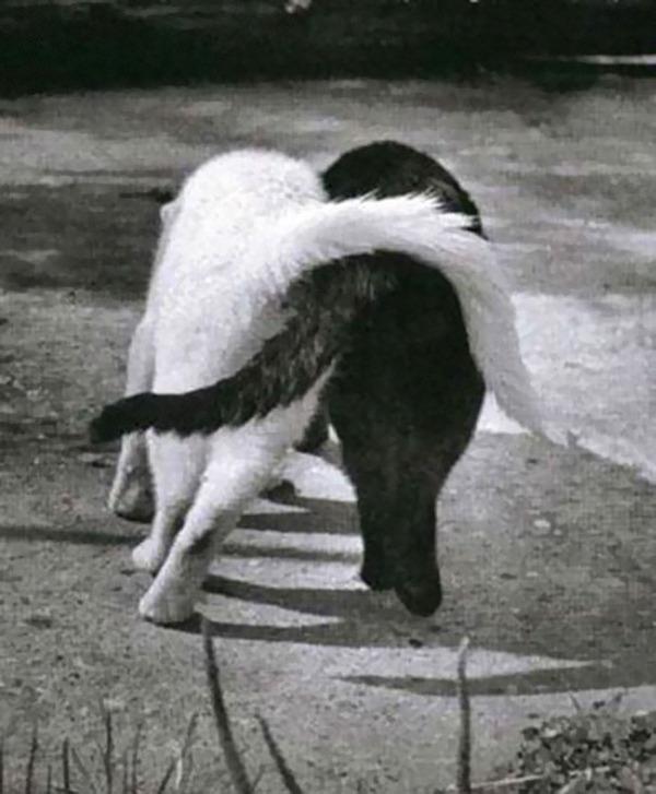 黒猫と白猫どっちが好き?どっちも可愛すぎ【猫画像】 (6)