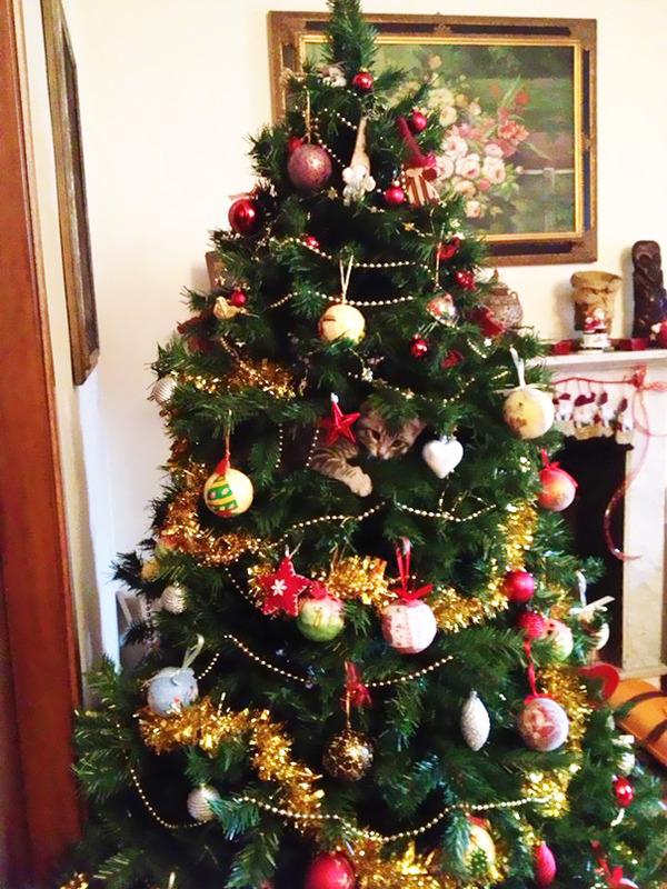 猫、あらぶる!クリスマスツリーに登る猫画像 (32)