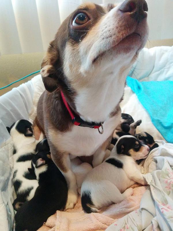 お母さん犬とその子犬達のソックリ集合写真!犬親子画像 (19)