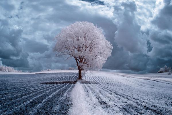 IR(赤外線)カメラで撮影されたポーランドの自然写真が美しい (1)