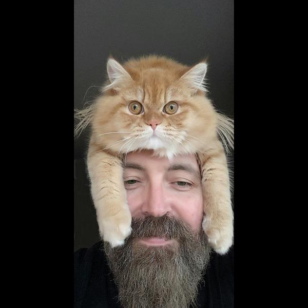 猫帽子 9