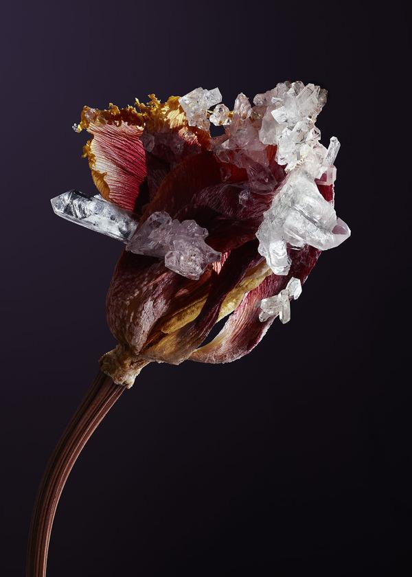 花と結晶。植物と鉱石を融合した芸術作品 (6)