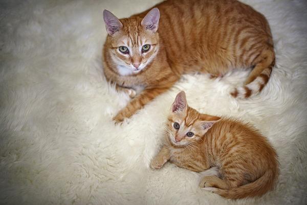 大人猫と子供猫の仲良し画像 (3)