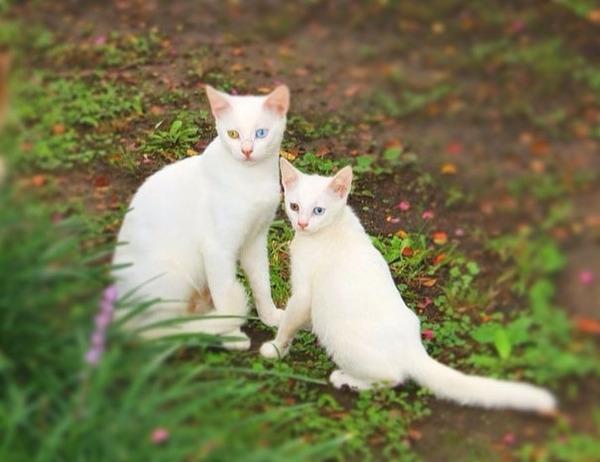 大人猫と子供猫の仲良し画像 (1)