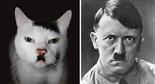 ほぼ完全に一致!海外の有名人とそっくりな動物たち! (15)