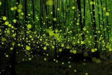神秘的な世界の森、樹海写真の数々