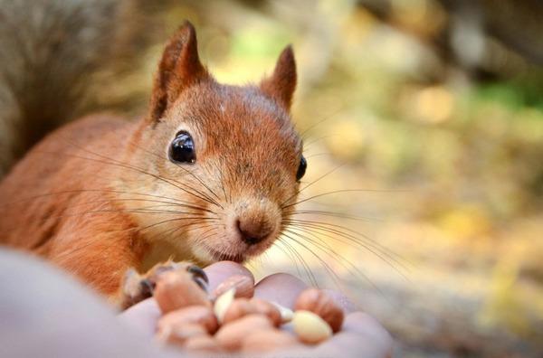 フィンランドの野生動物 7