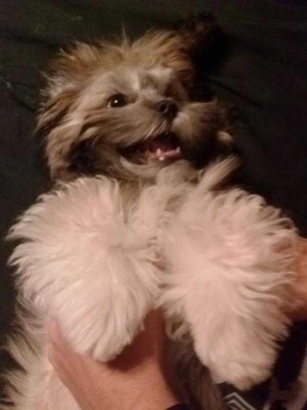 愛嬌たっぷりな笑顔を振りまくわんこ達!【犬画像】 (21)