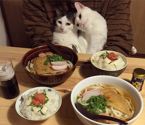 猫のバレンタインデー!【猫ラブラブ画像】 (62)