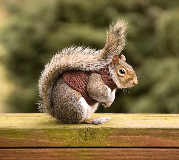 寒いからニットのセーターを小動物に着せてみた画像 (7)