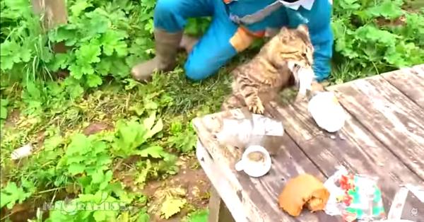 お魚くわえたどら猫