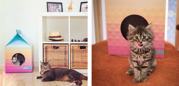 猫がすっぽり入れちゃう牛乳パック型のネコホイホイ! (6)
