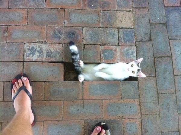 ジャストフィット猫 18