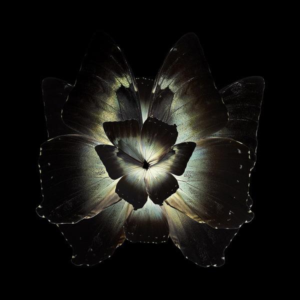 蝶々や昆虫の翅(はね)を合成して作った花の写真シリーズ (10)