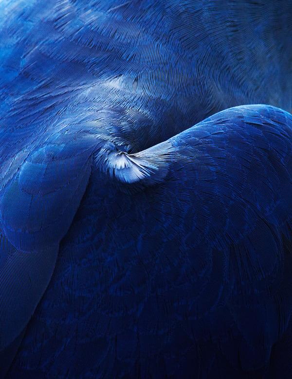 美しい鳥の羽根の写真 by Thomas Lohrby 1