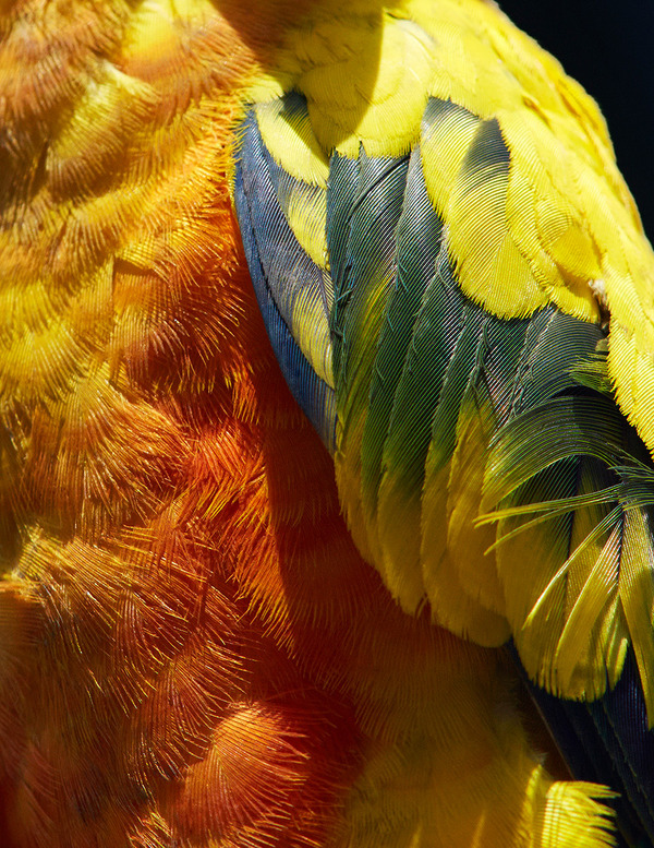 美しい鳥の羽根の写真 by Thomas Lohrby 6