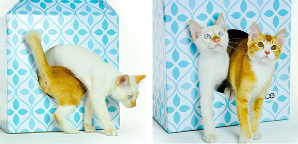 猫がすっぽり入れちゃう牛乳パック型のネコホイホイ! (5)