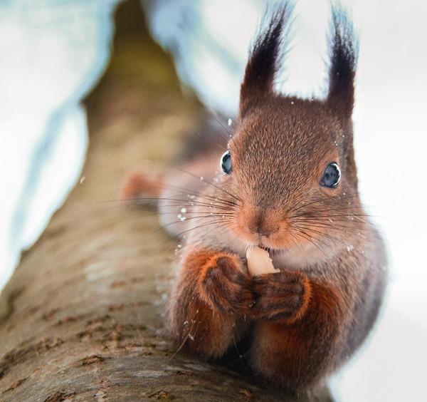 キツネやリスと戯れようぜ!フィンランドの胸キュン野生動物 (3)