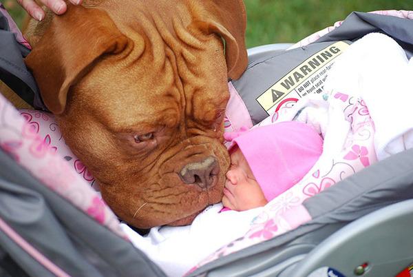 ペットは大切な家族!犬や猫と人間の子供の画像 (88)