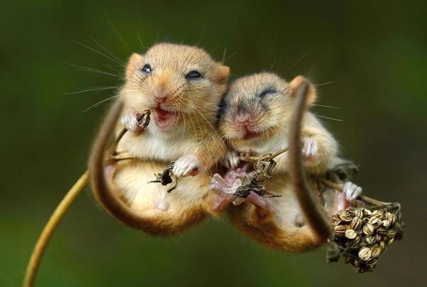 抱きしめあうマウス