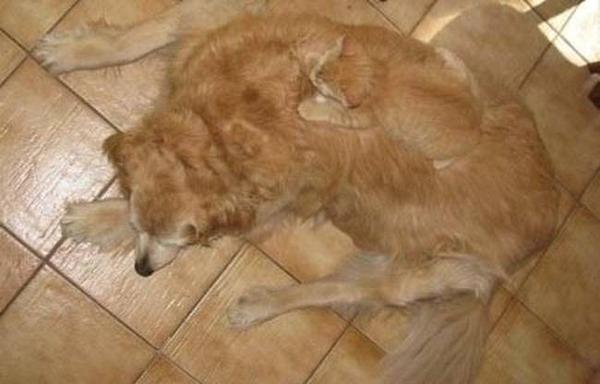 犬と猫も一体化!