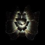 蝶々や昆虫の翅(はね)を合成した花のようなアート写真【昆虫】